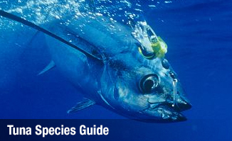 species guide1